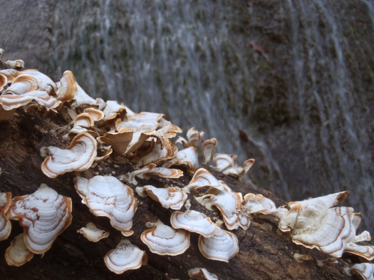Cool fungi in the foreground, waterfall in the background.