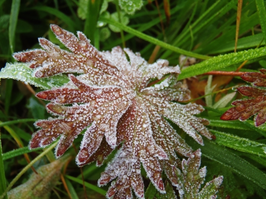 First frost.