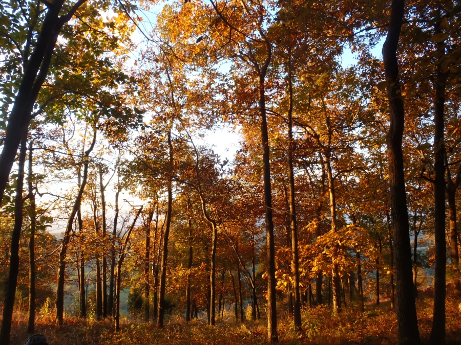 Fall colors in the forest.