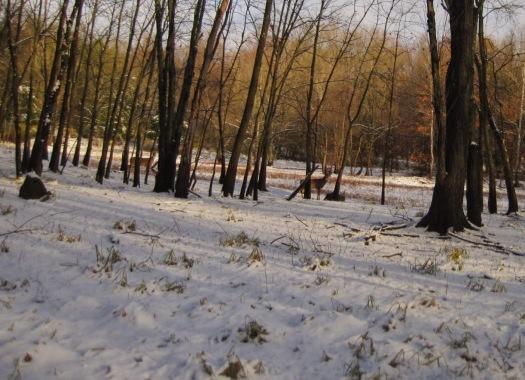 We saw lots of deer.