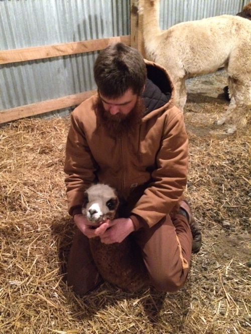 Evan is a great alpaca dad.