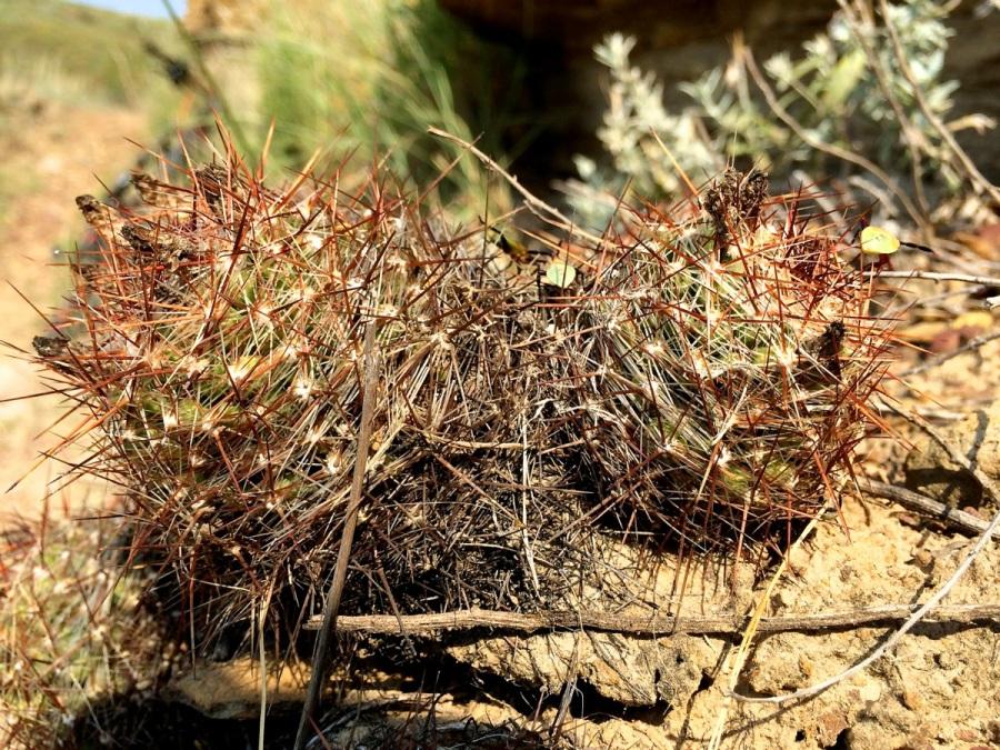 spiky plants switchgrass