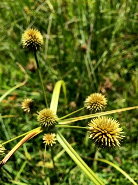 Spiky plant.