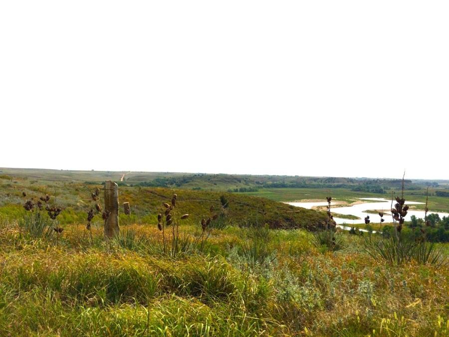 switchgrass landscape