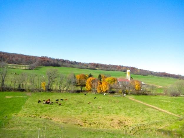 clover creek farms