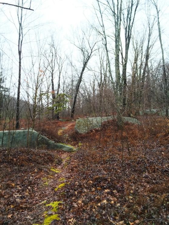 quehanna_hiking4